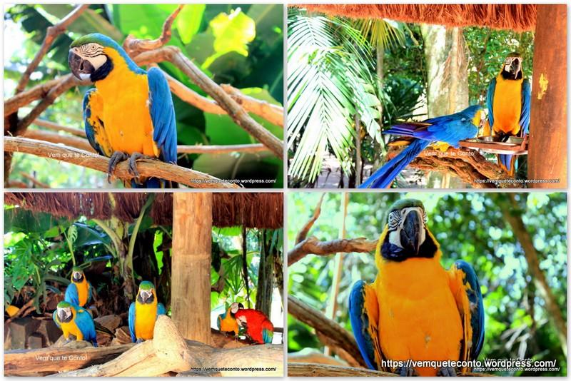 Araras Mansas, Parque das Aves.
