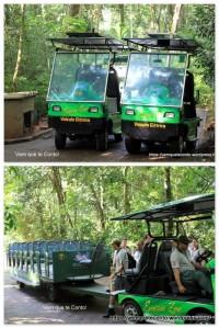 Carrinhos elétricos - Macuco Safari.