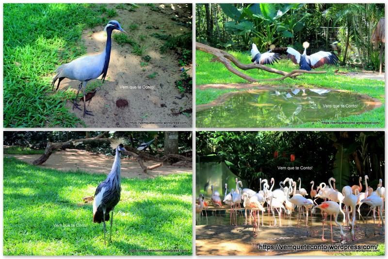 Algumas aves no Parque das Aves
