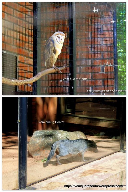 Alguns animais do Refúgio Biológico Bela Vista.