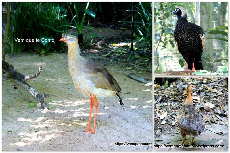 Viveiro Floresta, Parque das Aves