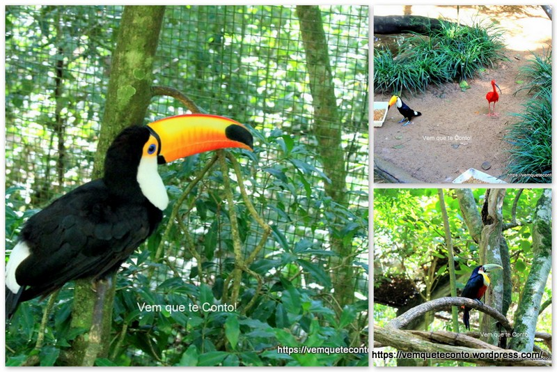 Viveiro Pantanal, Parque as Aves.