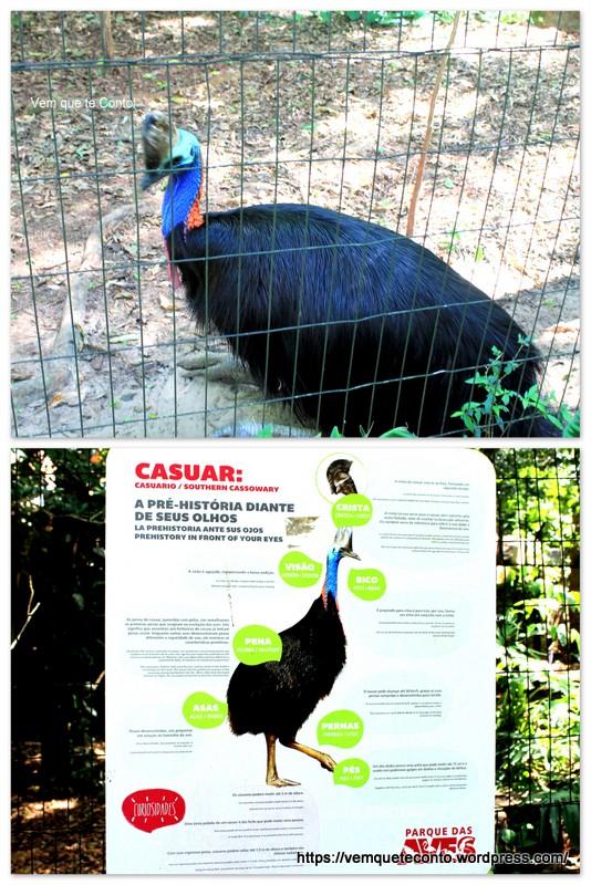 Casuar, Parque das Aves.