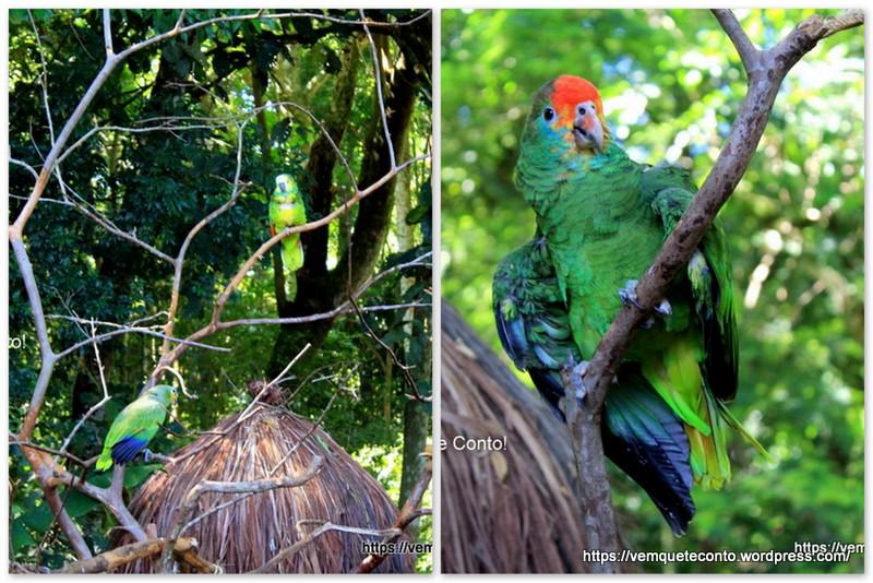 Papagaios solto no Parque das Aves